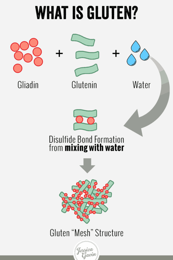what is gluten - infographic showing how its formation