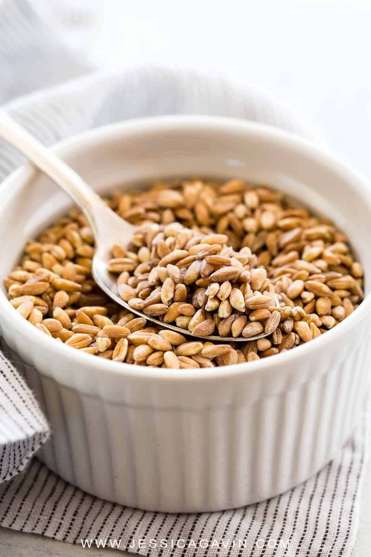 Farro is an ancient whole grain with dietary benefits. Farro is derived from wheat so it is not gluten-free. This informational guide will explain what farro is, how to select the right variety, cooking techniques, nutritional information, and recipes to try. #farro #ancientgrain #ingredient #cooking