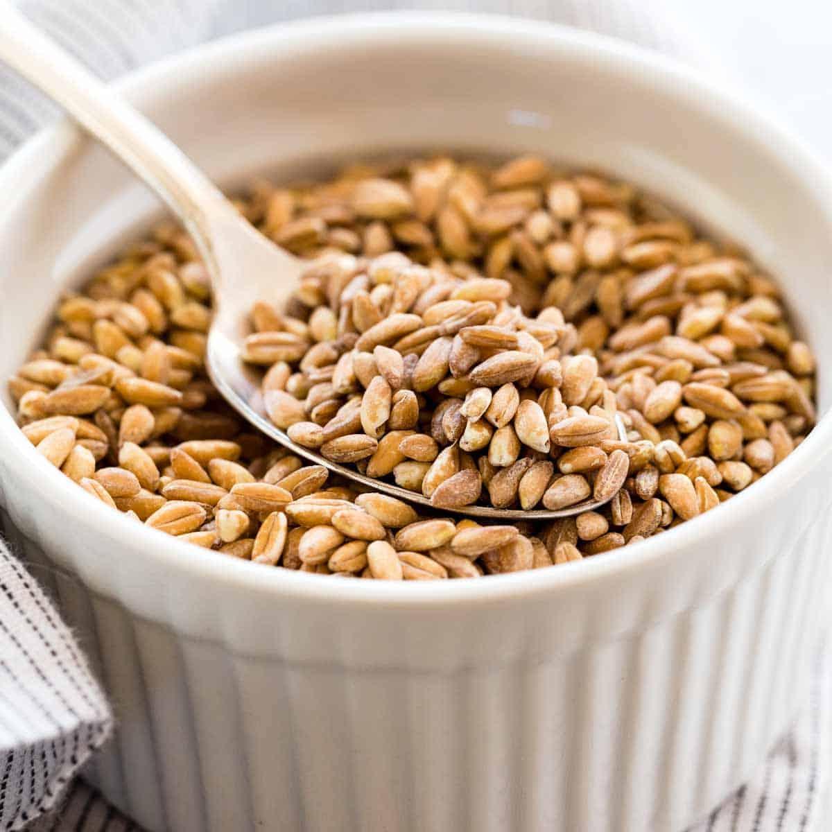 What is Farro? An Ancient Grain Worth