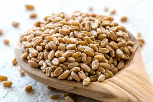 Wooden spoon filled with wheat berry
