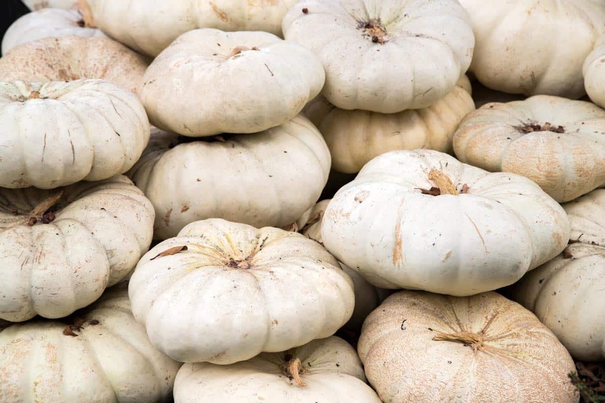 Flat White Boer Ford Pumpkins